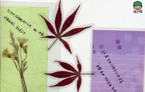 漂亮的叶脉书签,叶子书签制作作品-封存 日志测试页图片