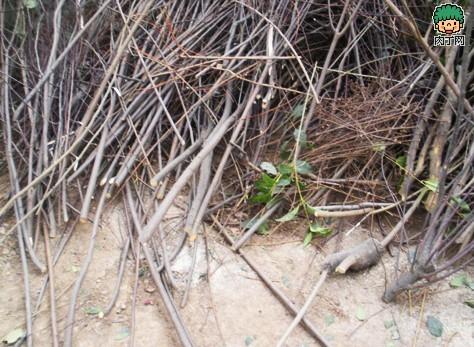 树枝废物利用 树枝桌等树枝家居装饰手工制作