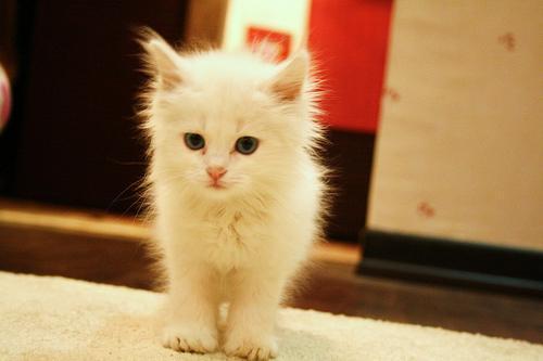 萌宠喵喵 可爱小猫咪图片大全-封存 日志测试页-中国