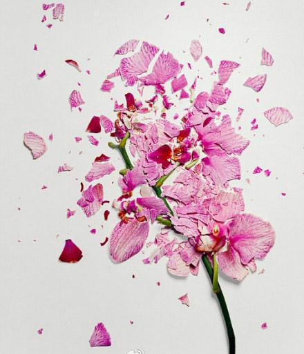 纽约设计师的一组别出心裁的花瓣拼画作品欣赏