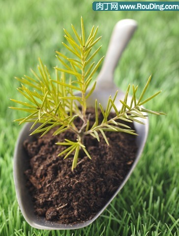 阳台种菜可以学习的天然肥料制作方法大全