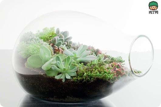创意生活玻璃花园DIY